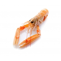 Raw Shelled Scampi Tail HPP